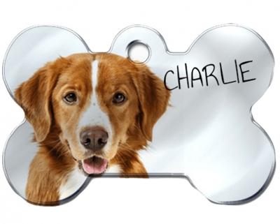 Fényképes kutyabiléta